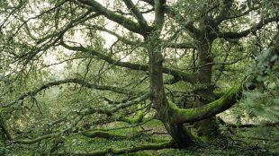 Thierry Girard, forêt de l'île de Ré.