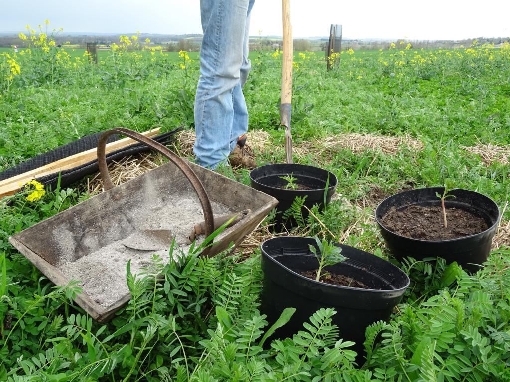 plantation bacs terre pelle