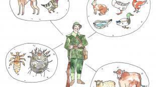 soldat, animaux