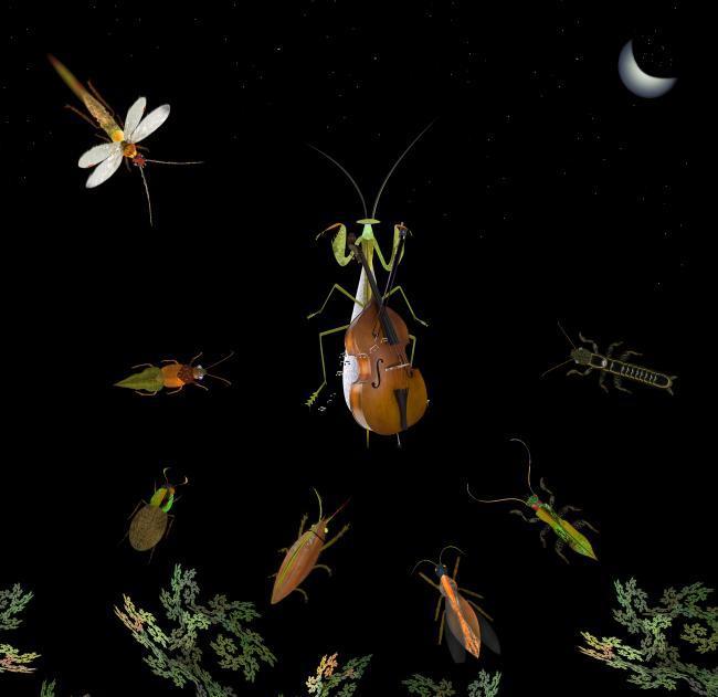mante religieuse contrebasse ciel étoilé insectes lune