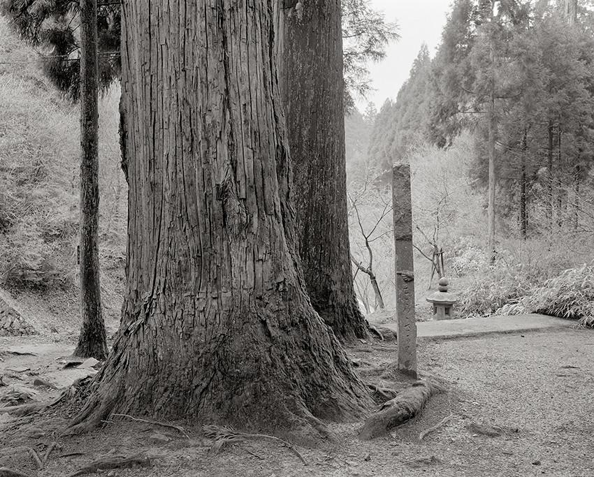arbre forêt pierre Japon