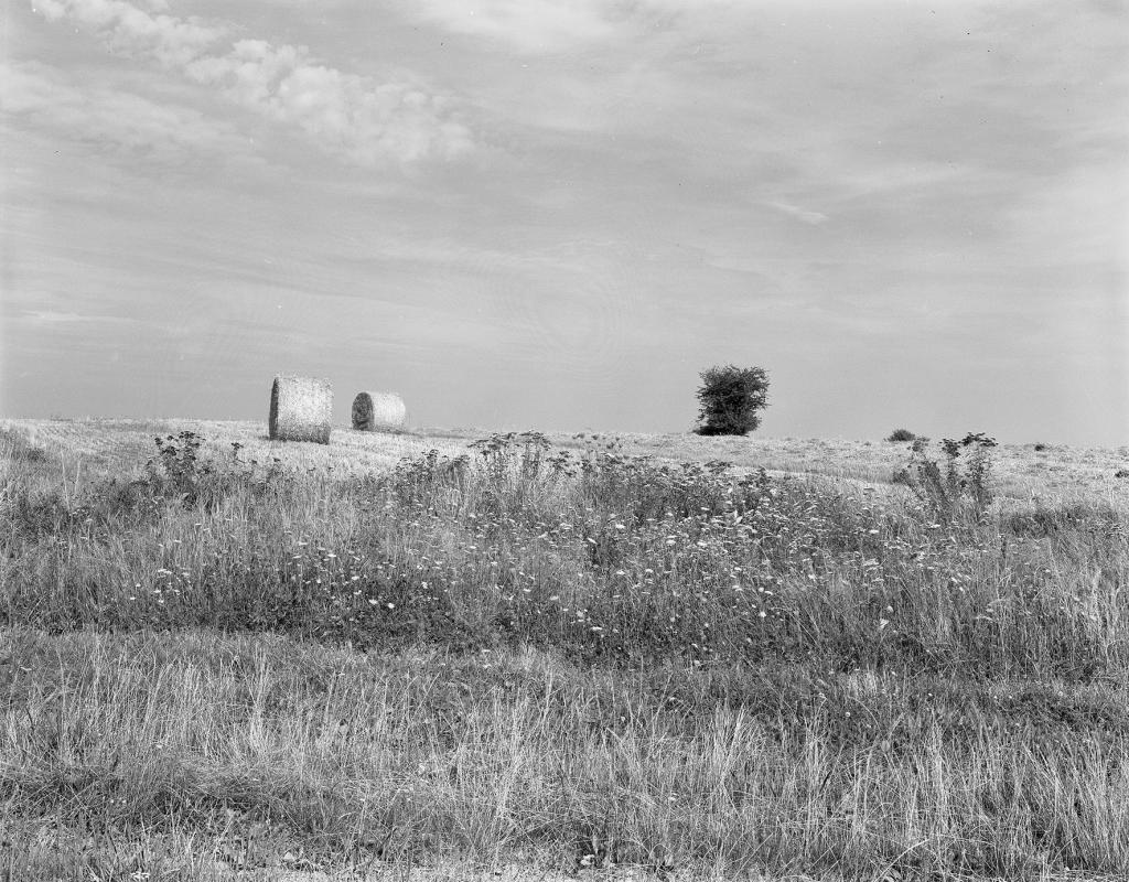paysage botte de paille arbre campagne