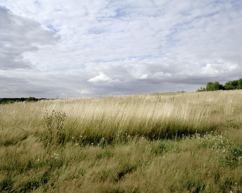 paysage blé nuages arbres campagne
